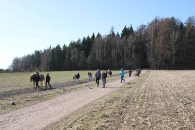 Ihmisiä, koiria ja hevosia kävelyllä Lystikukkulan edessä pellolla.