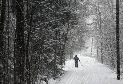 """SK: Yleiskaava mustasi Helsingin vihreät – """"Mahdollistaa lähes kaikkien laajojen metsäalueiden nakertamisen"""""""