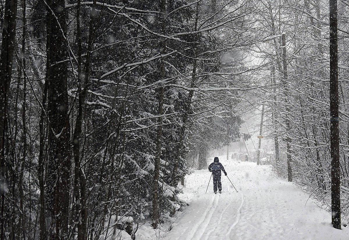 Hiihtäjä lumisateisessa Keskuspuistossa Helsingissä 3. tammikuuta 2017. Helsingin keskuspuisto on kaupungin suurin puisto (700 hehtaaria). Puisto edustaa hyvin etelärannikon vaihtelevaa luontoa, ja siellä on myös luonnonsuojelualueita. Puistossa on paljon ulkoilureittejä (n. 100km), joista osa on talvisin hiihtäjien käytössä. Puistossa on myös ratsastusreittejä. LEHTIKUVA / TEEMU SALONEN